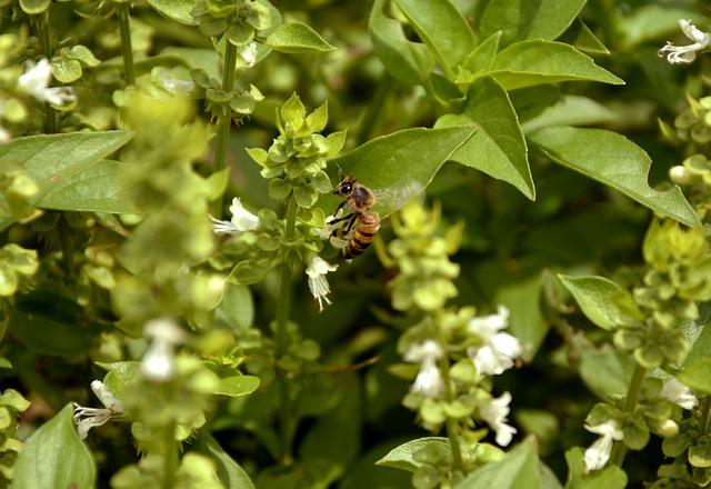 včela na rostlině