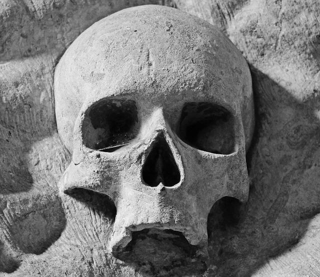 zkamenělá lebka