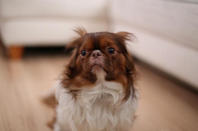 vystrašený pes
